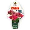 """Стимулятор для комнатных цветов """"Гармония роста"""" JOY 30 мл 132093 (12)"""